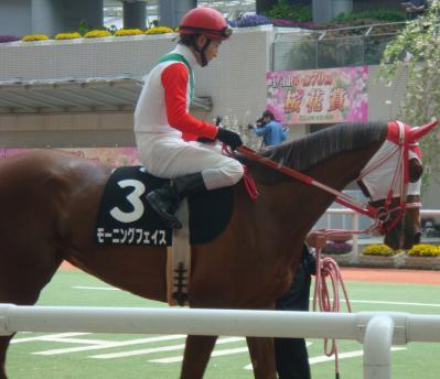 2010/04/11 阪神8R 忘れな草賞(オープン) 優勝馬モーニングフェイス写真