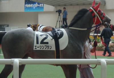 阪神競馬場 新馬戦エーシンブラン画像