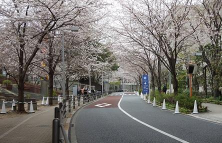 桜 六本木