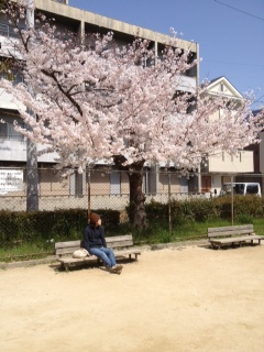 2013桜5