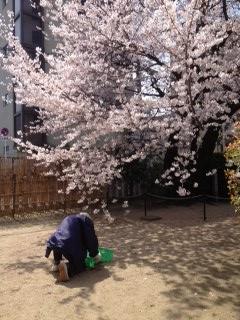 2013桜9