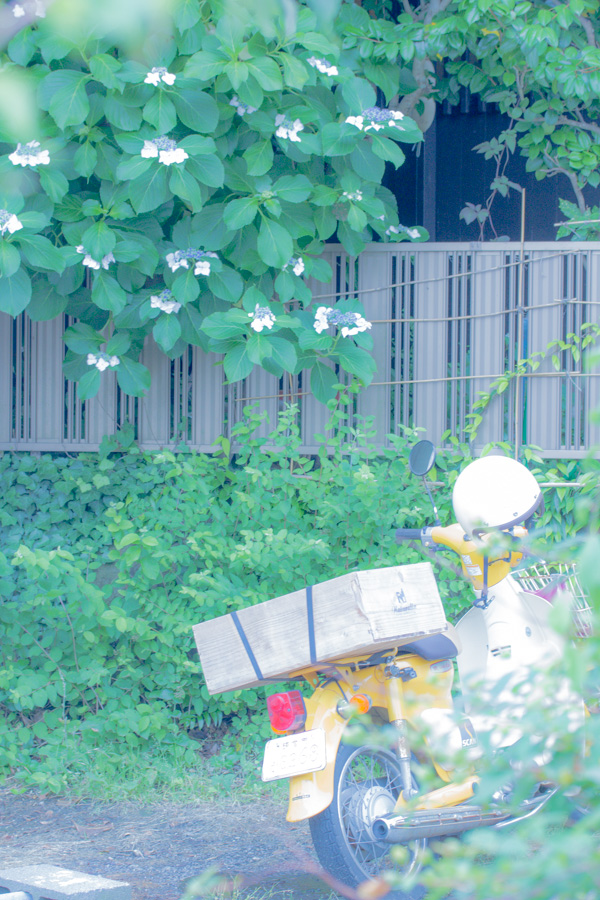ajisaiBike.jpg