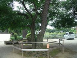 東松山 (14)