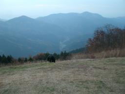 ワイルド笠山ん (10)