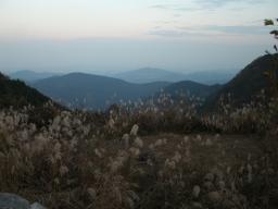 ワイルド笠山ん (8)