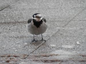 001_convert_20120112095320鳥1