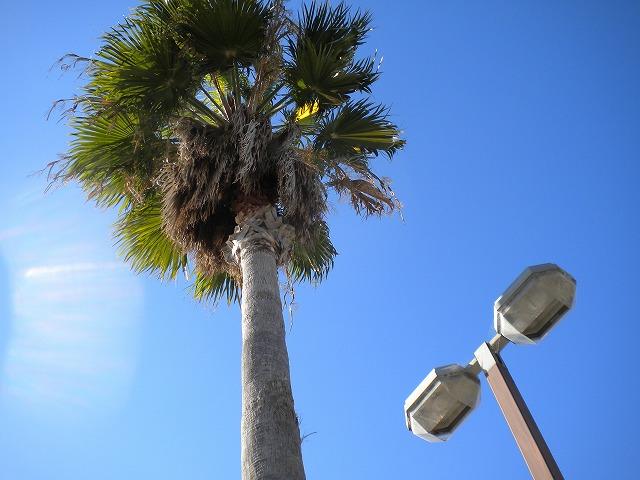10.11.27 明石 風の散歩道015