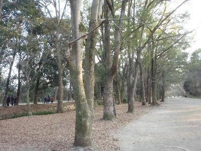 下鴨神社 (3)