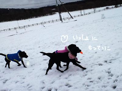 雪遊びフリスビー一緒に。。。