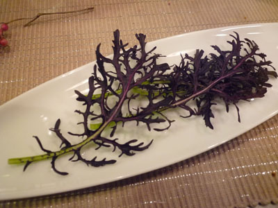 赤からし水菜