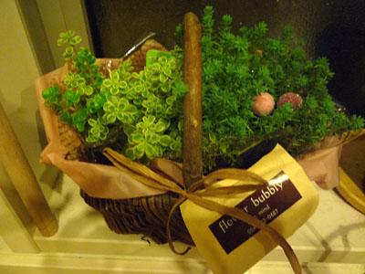 お花買ったの