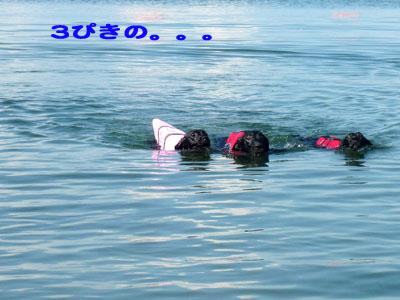 海ヌートリア再びのコピー