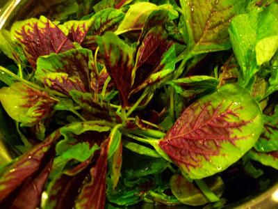 ヘチマ紅康菜