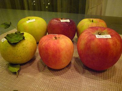 りんご6しゅるい