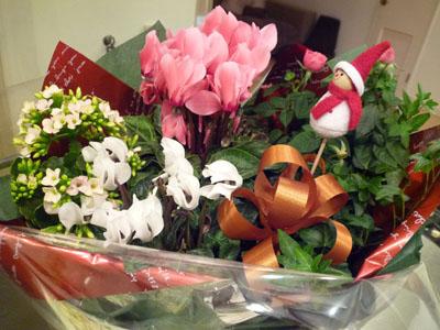 クリスマスお花っち