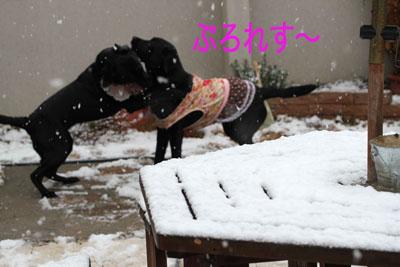 雪プロレスのコピー
