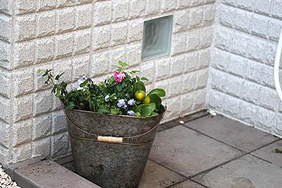 バケツの花