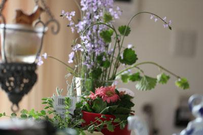 お庭の雑草とミニガーベラ