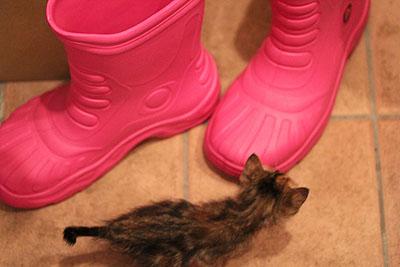 猫 靴とねこ