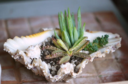 貝に寄せ植え