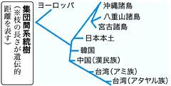 集団間系統樹