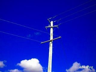 サトウキビ 電信柱