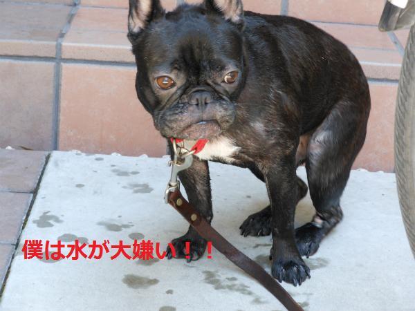 Osukemizu.jpg