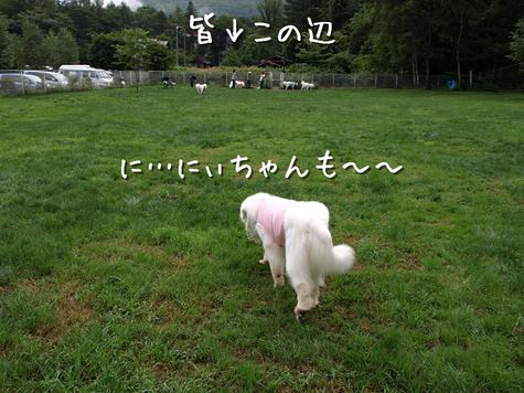 niko21.jpg