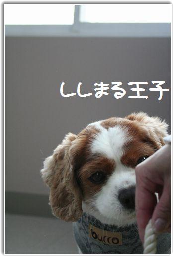 ししししししししぃぃ!