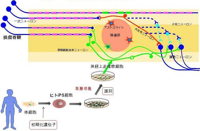 20120314a_fig.jpg