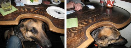 ムーチョ店お客様犬
