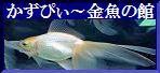 【 かずぴぃ~金魚の館(+α 磯釣り)本館ブログへ 】