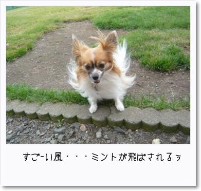 [photo14181997]image