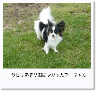 [photo14182126]image