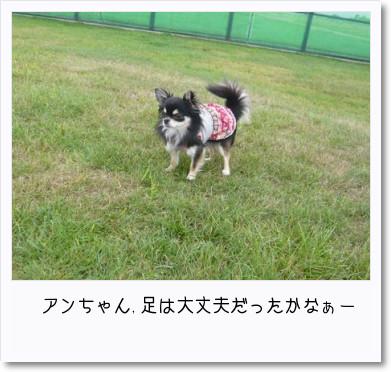 [photo14182345]image