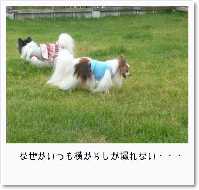 [photo14182652]image