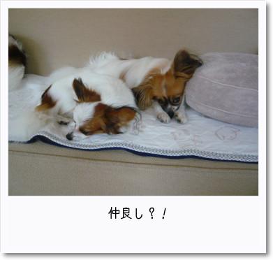 [photo24192071]image 加工