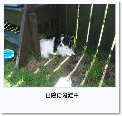 [photo25190226]image 加工