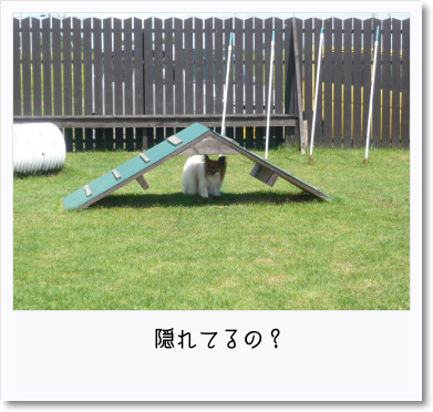 [photo25191265]image 加工