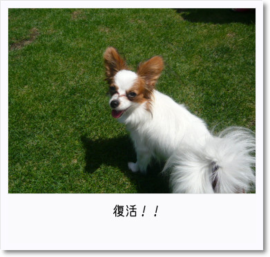 [photo25190393]image 加工