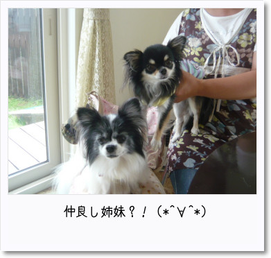 [photo25190869]image 加工