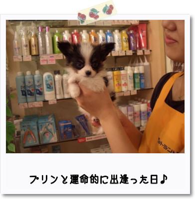 [photo13215103]image