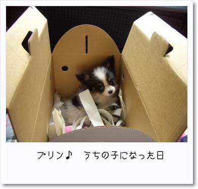 [photo13214111]image
