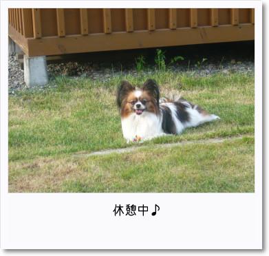 [photo14192996]image 加工
