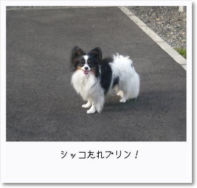 [photo14192884]image 加工