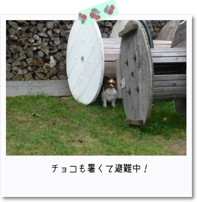 [photo22210134]image 加工