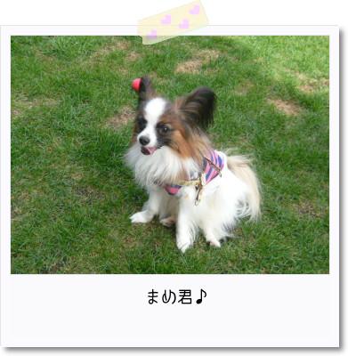 [photo25165509]image 加工