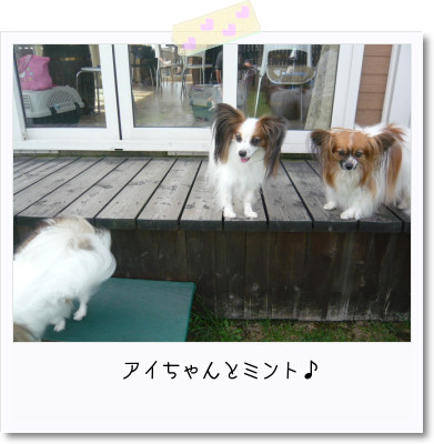 [photo25165228]image 加工
