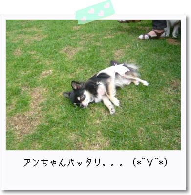 [photo25164528]image 加工