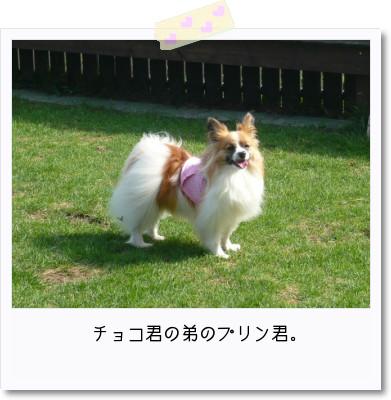 [photo25165672]image 加工